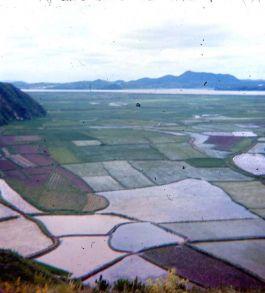 NK View 5